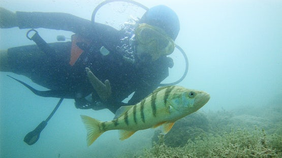 Scuba diving in lake Annecy